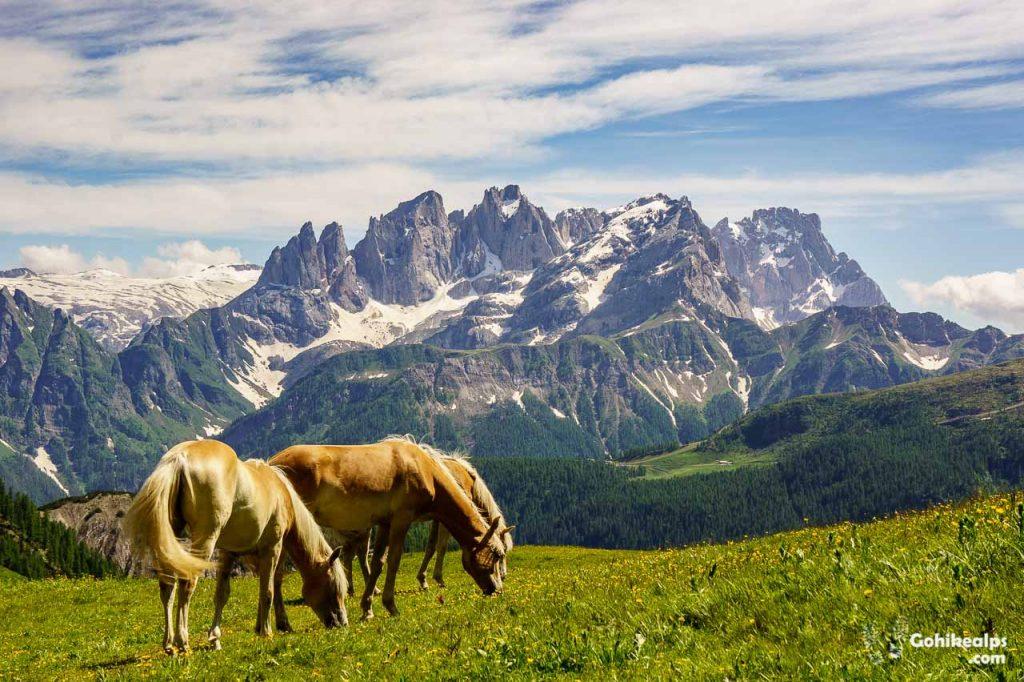 Horses Near Passo di San Pellegrino